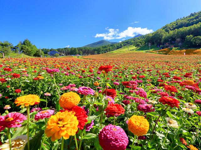 富士見高原花の里